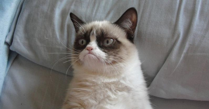 Meme: grumpy cat