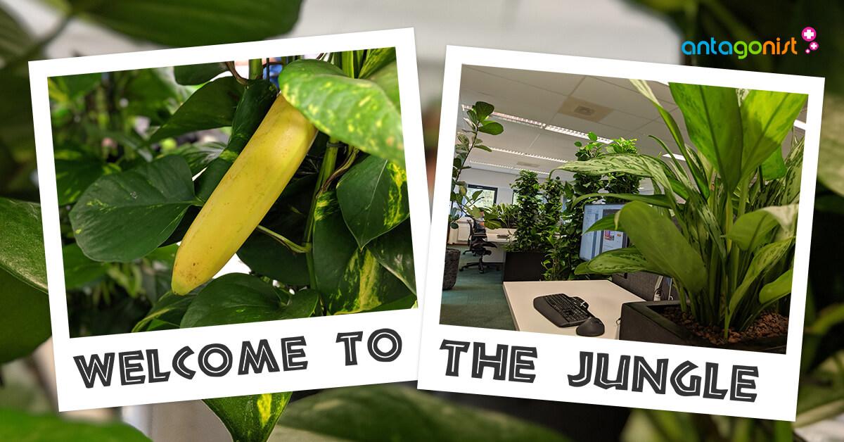 De planten op het kantoor van Antagonist.